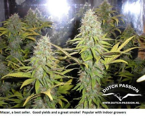 grow ls for weed gallery weed plants growing indoors