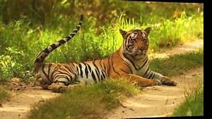 Top Wildlife Sanctuaries In India