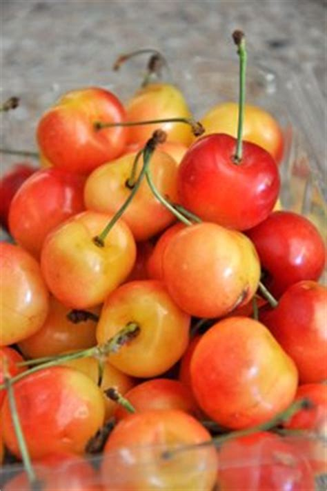 cherries types what are rainier cherries baking bites