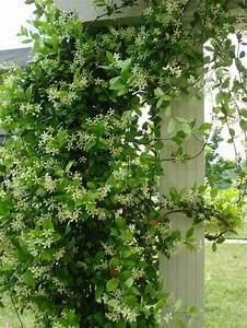 Plantes D Ombre Extérieur : am nagement jardin ext rieur m diterran en quelles ~ Melissatoandfro.com Idées de Décoration