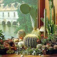 Trockene Luft Im Zimmer : pflanzen f r trockene heizungsluft pflege und tipps ~ A.2002-acura-tl-radio.info Haus und Dekorationen