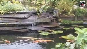 Jardin Avec Bassin : bassin de jardin a lagunage youtube ~ Melissatoandfro.com Idées de Décoration