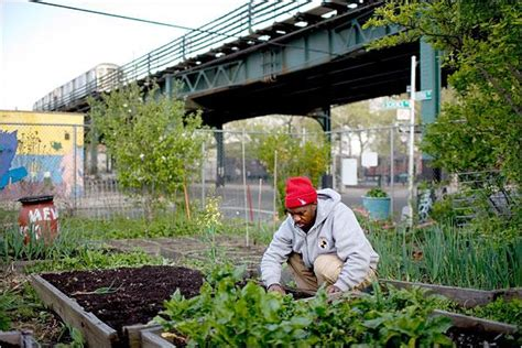Urban Farming Takes Off In Detroit