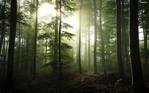Forest Wallpaper Free 10746 - HD Wallpaper Site