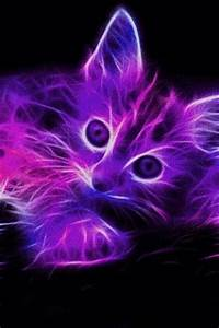 Wolves Neon and Kittens on Pinterest