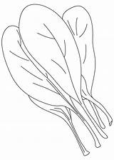 Spinach Coloring Pages Leaf Clipart Vegetables Vegetable Printable Leaves Colouring Template Sketch Getcolorings Tomato sketch template