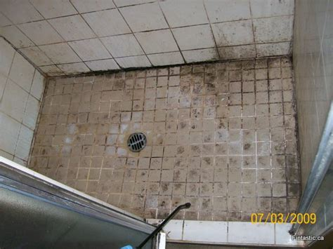 moldy shower tiles fintastic services friendly and