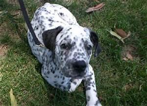 Forest Hills Pet Care: Breed Blends
