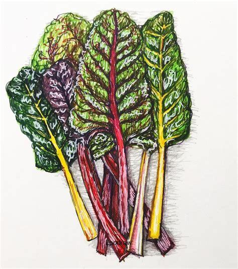 pin  tad   vegetable rainbow chard chard