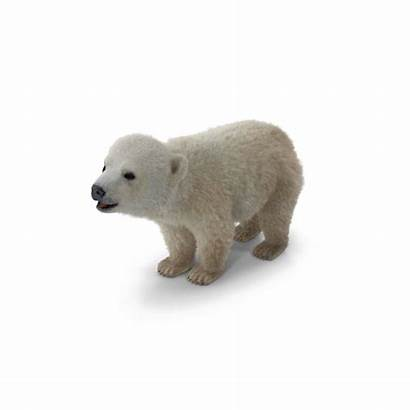 Polar Bear Background Pixelsquid Psd Interactivity Initial