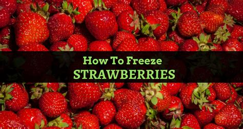 how to freeze with fruit fresh how to freeze strawberries with 6 easy methods