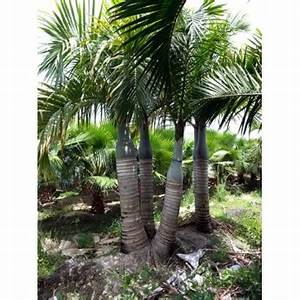 Spindle Palm Triple