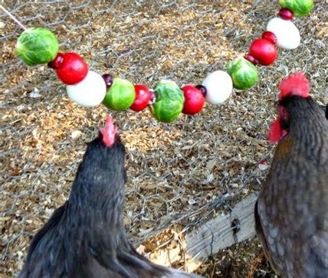 healthy homemade treats   chickens chicken