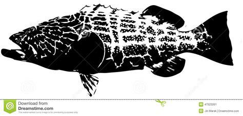 fish grouper vector vettore schwarzer barsch svart nera cernia pesce saltwater mostly zwarte tandbaars