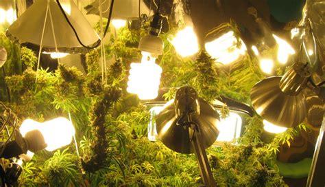 conseils importants pour la culture du cannabis en interieur
