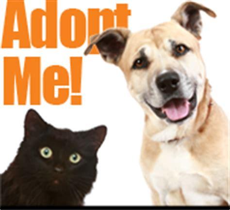 adopt  pet pet adoption waukesha wi