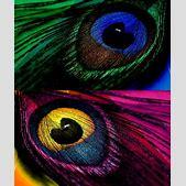 colorful feathe...