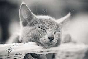 Bilder Schlaf Gut : schlaf gut kleine maus foto bild tiere haustiere katzen bilder auf fotocommunity ~ Orissabook.com Haus und Dekorationen