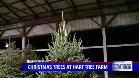 hart tree farm cutting your own christmas tree or just