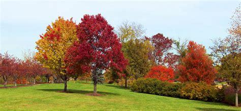 autumn trees   park  stock photo public domain