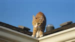 cat on a tin roof cat pictures cats and camels