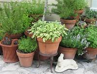 potted herb garden Seed to Feed Me: GROWING HERBS