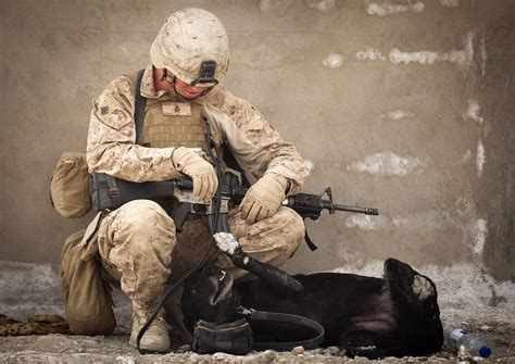 Ied Detection Dog By Militaryp Os On Deviantart