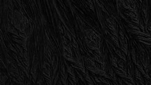 BLACK V by Jean-Marc Denis  Black