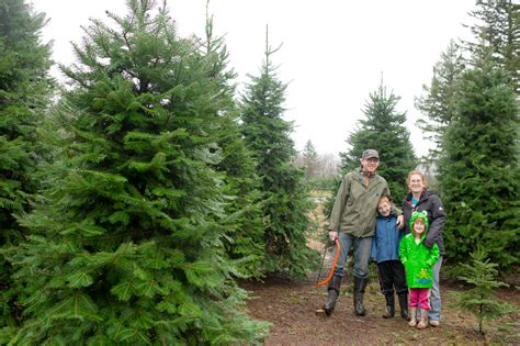 christmas tree cutting with the grozell s chilliwack