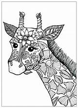 Coloring Pages Giraffes Giraffe Few Printable Children Justcolor sketch template