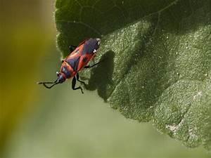 Schädlinge Im Garten : sch dlingsbek mpfung garten ~ Lizthompson.info Haus und Dekorationen