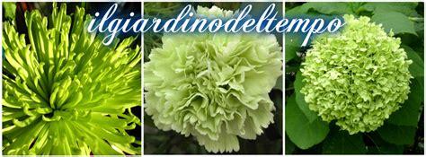 ci dei fiori linguaggio dei fiori di colore verde il giardino tempo