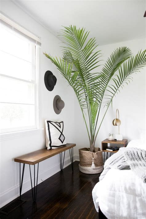 Bedroom Designs With Plants by Best 25 Interior Plants Ideas On House Plants