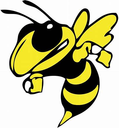 Hornet Mascot Clipart Cliparts Hornets Cartoon Attribution