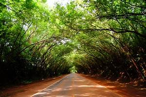 Free Images : tree, nature, branch, light, sunshine, sun ...