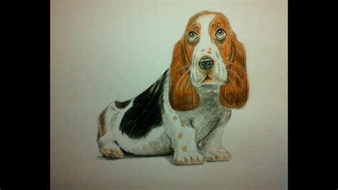 draw  dog  watercolor pencils draw  paint