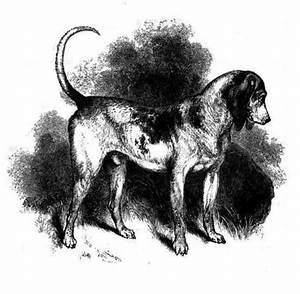 25 Now-Extinct Dog Breeds You've Never Heard Of - Page 10 ...