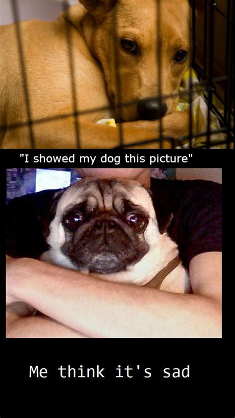 Sad Pug Meme - depressed dog memes image memes at relatably com