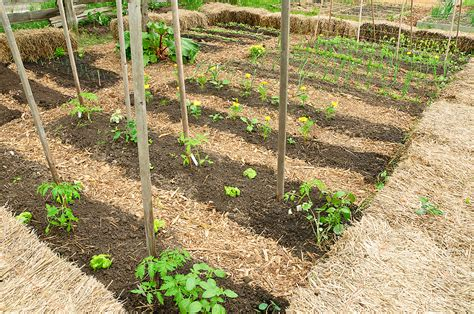 vegetable crop rotation harvest  table