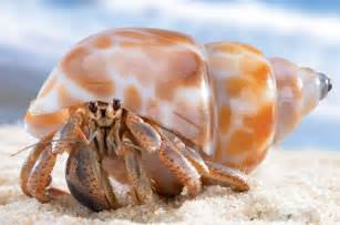 suumo and tokyo create artificial hermit crab shell official of the japan