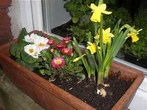 Blumen Für Schatten : welche blumen f r blumenkasten im schatten mein sch ner garten forum ~ Whattoseeinmadrid.com Haus und Dekorationen