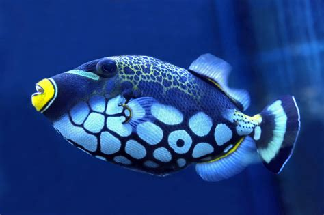 Wonderfully Different Types Of Fish This Will Amaze You