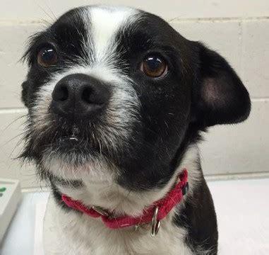 missing ocala dog    years   detroit