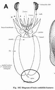 Mri Spine Diagram