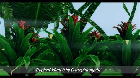 outdoor pack   tropical plants  palm trees