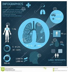 Lungs Infographic Infocharts Stock Vector