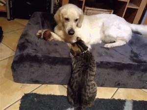 A Dog And Cat Love Story As Told By GIFs