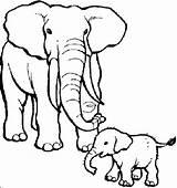 Coloring Elephant Teaching Through Elephants sketch template