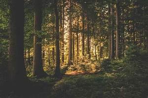 Bosques de Coníferas: Características, Flora, Fauna, Clima ...