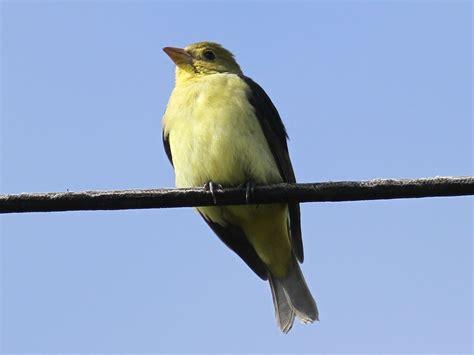 november 2012 san diego birding